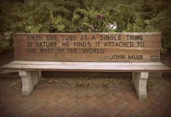 John-Muir-Quote-and-pic